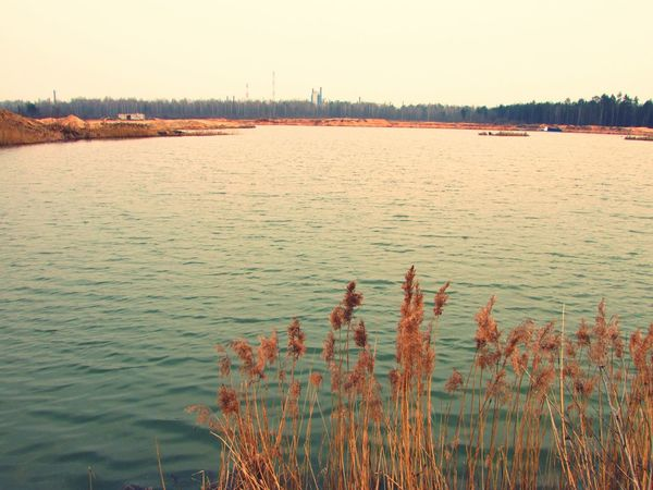 вода Природа Лес завод трава весна март