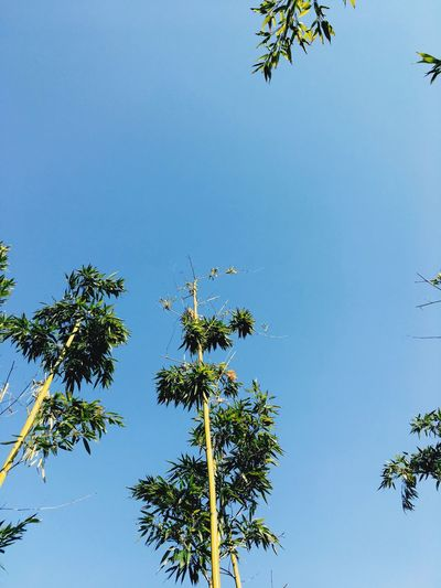 Tree Low Angle View Clear Sky Nature No People Growth Palm Tree Branch Bird Outdoors Day Animal Themes Beauty In Nature Sky Animals In The Wild Treetop Followme