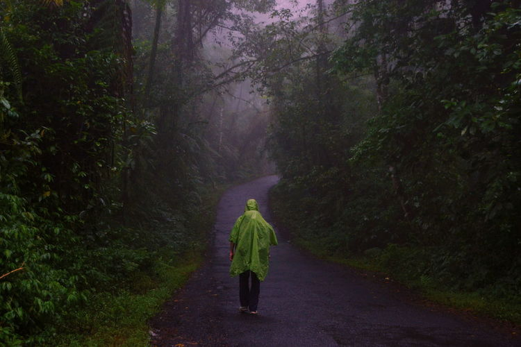 Rear View Of Man Walking On Road Amidst Trees In Forest