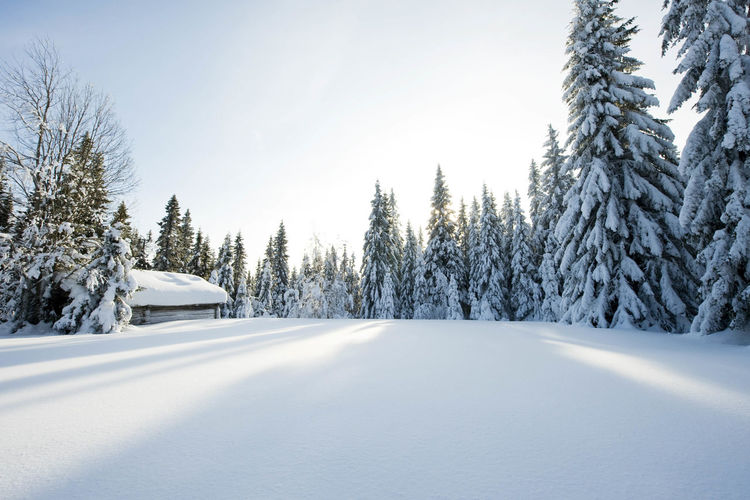 Cottage amidst trees against sky during winter