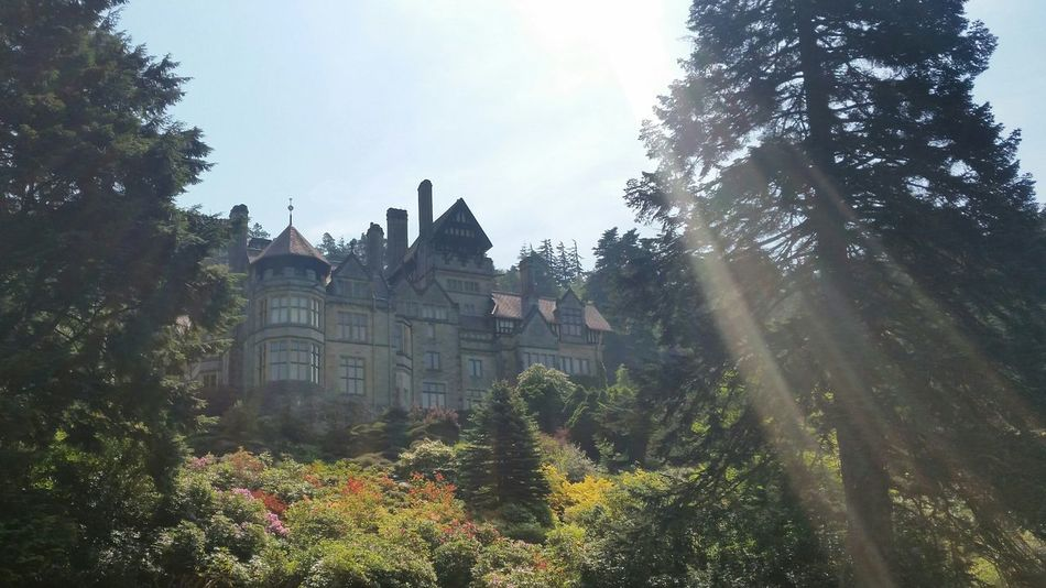 Cragside Rhododendron Flowers,Plants & Garden Green Nature Northumberland Wood Sun Leaves🌿 Castle Mansion