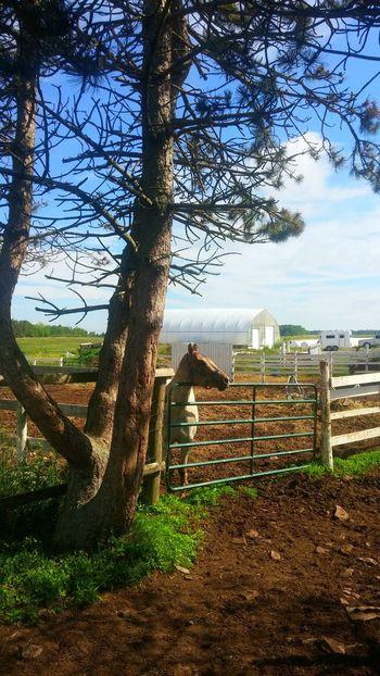 Majestic Horse Beautiful Strong Mesmorized White Tree Farm Life