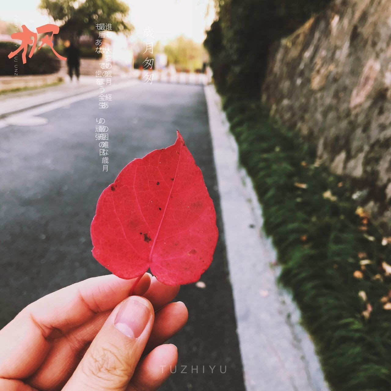 leaf, human hand, autumn, human body part, focus on foreground, one person, outdoors, real people, day, change, close-up, holding, nature, maple leaf, beauty in nature, tree, maple, people