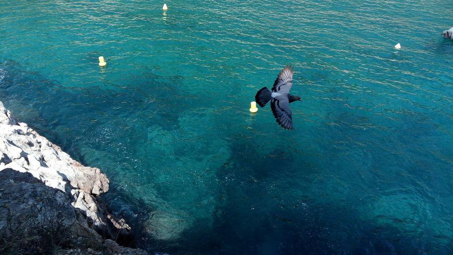 Paloma en el mar Volar Fly Dove Tossa De Mar Paloma Mar Cala Pola UnderSea Scuba Diving Water Swimming Sea Full Length Underwater Adventure Men High Angle View