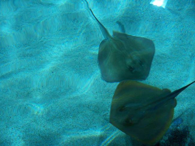 🤩🤩🤩 Raya Beauty UnderSea Water Underwater