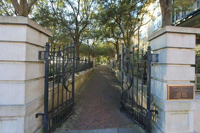 The Purist (no Edit, No Filter) Park Downtown Charleston  South Carolina