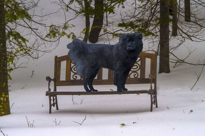 Dog on a park bench Absence Animal Head  Animal Themes Bench Chair Cold Cold Temperature Dog Domestic Animals Mammal One Animal Park Park - Man Made Space Pets Relaxation Sitting Winter Wooden Zoology