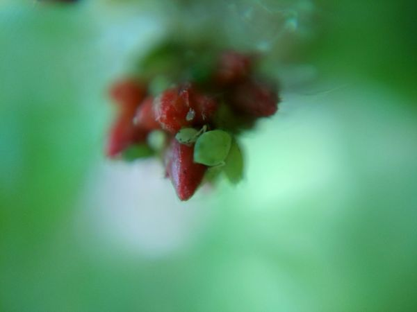 Beauty In Nature Day Flower Flower Head Food Fragility Green Color Indoors  Insect Photography Micro Photography Nature Red Selective Focus