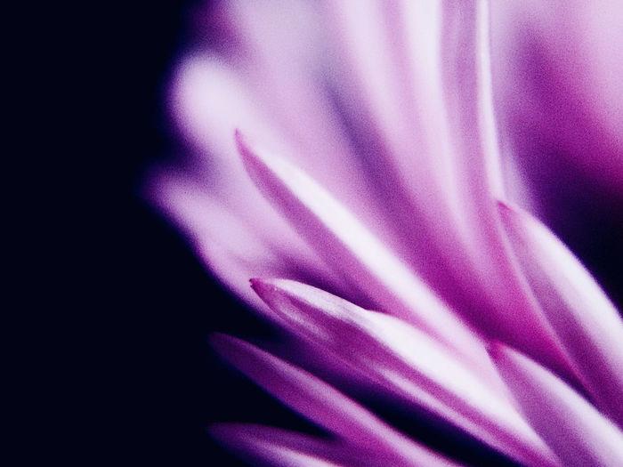 💜✨ Flower