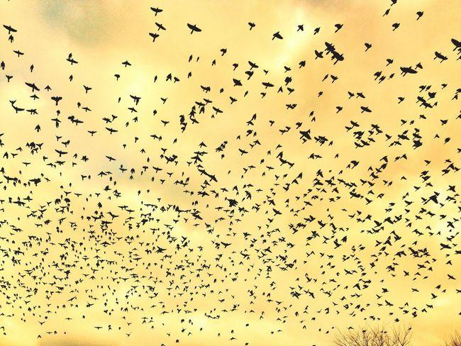Birds...
