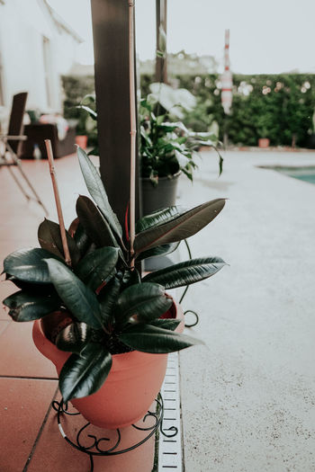 Close-up of potted plant on table in city