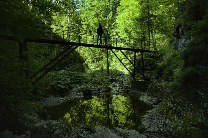 Ausflug in die Ötschergräben Enjoy The View Hike Green Color Fantastic_captures Niederösterreich Austrian Nature Nature Beauty In Nature Outdoors Wonderful View Eyeem4photography EyeEm Gallery EyeEm Selects EyeEmNewHere Eyeem Photography Nikon Photography EyeEm Masterclass Hello World Austriaholidays Forest Canyon Bridge Bridge View Mariazell Excursion In The Natur Be. Ready. EyeEm Ready   AI Now Colour Your Horizn Moving Around Rome California Dreamin This Is Queer Go Higher Summer Exploratorium Going Remote 10 The Great Outdoors - 2018 EyeEm Awards