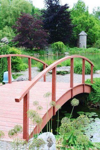 Bridge Pond