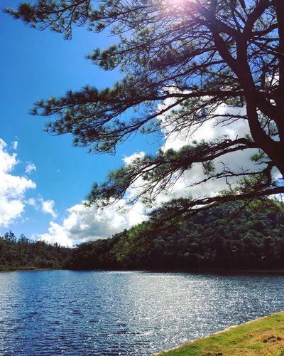 Lake on the Mountain / Tree Pine Pine Tree Pinetree / Lago na Montanha / Arvore Arvore Pinheiro Instagram Bestof_marcelo_mol Showcase July