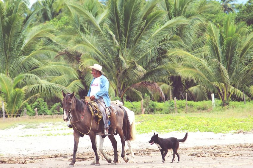 Palm Tree Domestic Animals Agriculture Sand Outdoors Animal Themes Beach Livestock One Person People Adult Day Nature Smiling Mammal Tree Adults Only Sky Horse Horseback Riding EyeEmNewHere