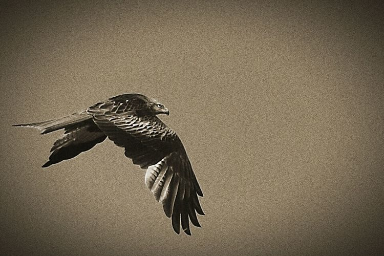 wild bird animal sky
