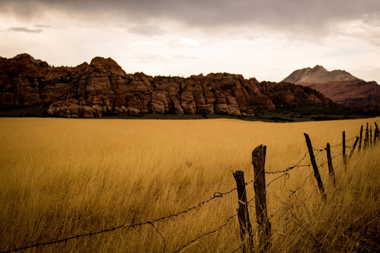 Adventure Photography Desert Travel Photography Zion National Park Backpacker Photography Beauty In Nature Deserted Explore Grass Landscape Outdoors Physical Geography Scenics Tranquility Yellow Grass