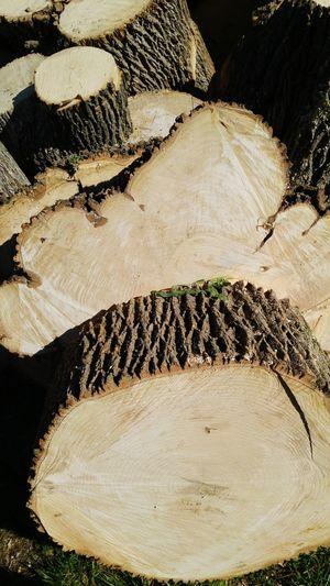 Ash Ashwood Lumber Scrapwood Firewood Outdoors
