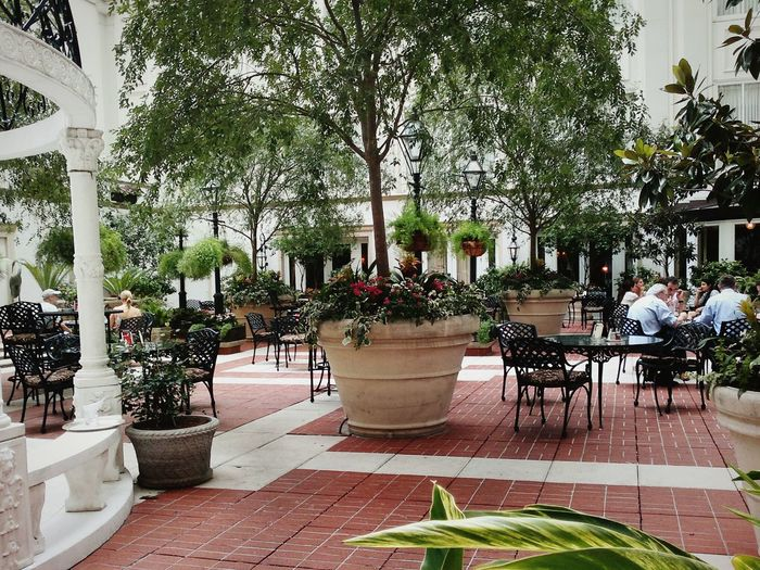 NOLA New Orleans, LA New Orleans EyeEm Courtyard  Gazebo Plants And Flowers Meetup Lunch Time! Relaxing Enjoying Life Interior Views Beautiful Interiors Historic Buildings Urban Tables And Chairs Historic City hotel Interior Design American Life Historical Building Travel Photography Queen City Beautiful Room Beautiful Setting 5 Star Service Vacation Time Southern Living Interior Views Mission Famous City Phoneography
