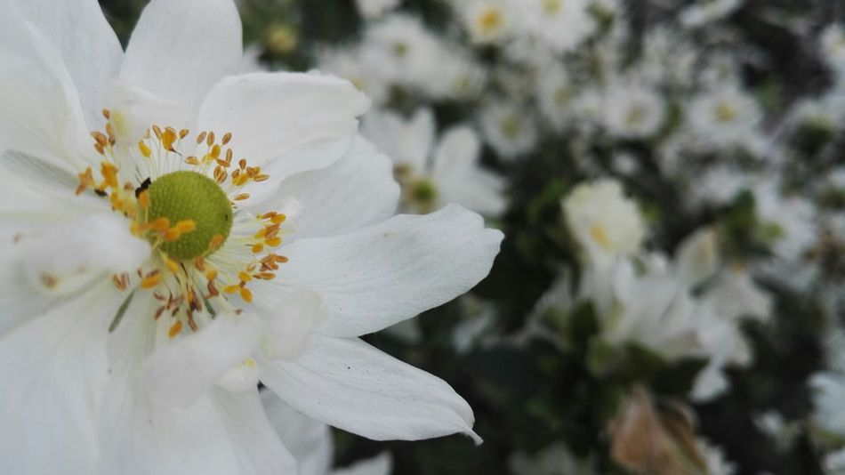 Flowers Flower Collection Beutiful Nature White Flower Focus Many Flowers Perfect Day Perfect True Beauty