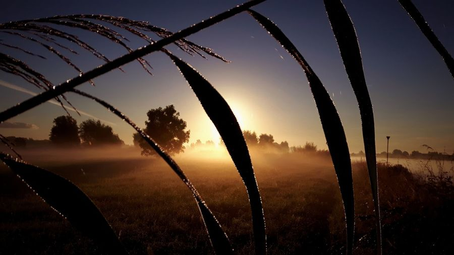 Plants growing on field against sky during sunrise