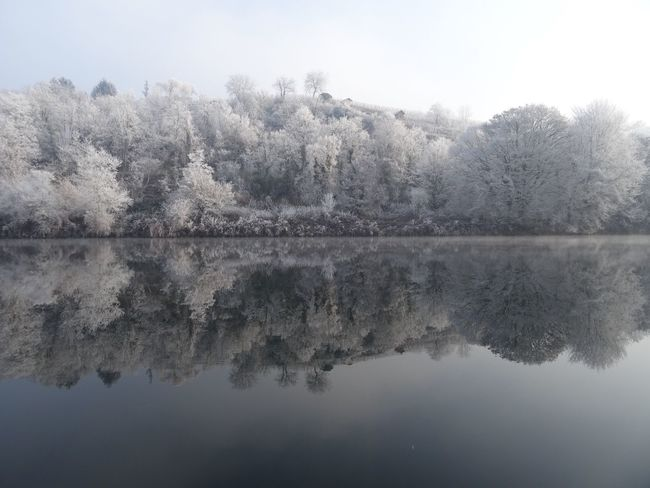 Reflection Water Nature Tree Tranquility Waterfront Outdoors Beauty In Nature Lake No People Scenics Standing Water Winter Wonderland Mirror Neckar River White Frost Mist Clear Sky Germany Frost Frozen Dreaming Symmetry Landscape Freshness