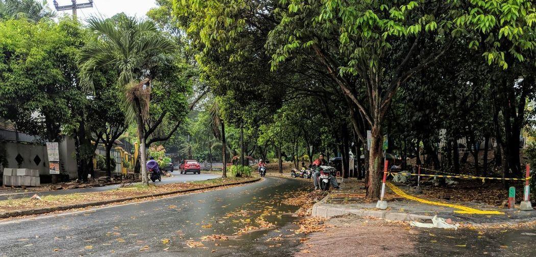 First day of rain Tree Water Sky Road Street Scene