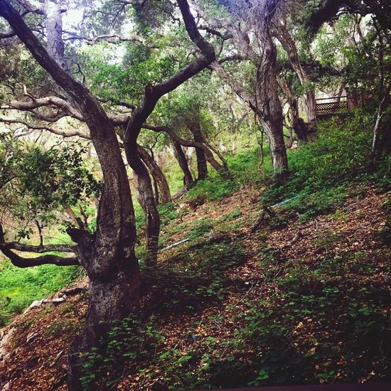 Nature Trees Avila Beach CA Outdoors
