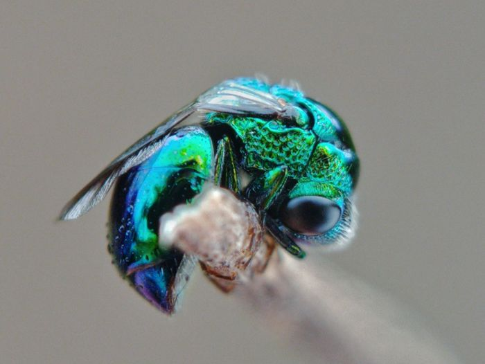 Macro shot of insect on blue background