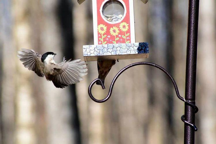 Bird Flying