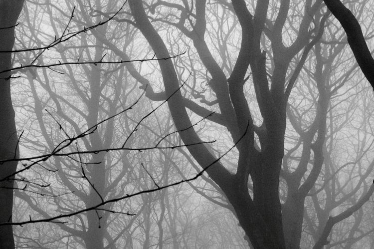 Tree Bare Tree Branch Low Angle View Nature No People Silhouette Sky Day Outdoors Beauty In Nature Woods Landscapes Fog Mania Hazy  Landscape_photography Magical Tree Trunks Tranquility Witches Nature Beauty In Nature Atmospheric Mood Yorkshire If You Go Down To The Woods Today