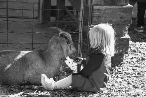 Goat & girl Childhood Real People Sitting Pets Animal Themes Mammal Lifestyles Leisure Activity One Animal One Person Outdoors Friendship Livestock Nature People Day Australia Nsw Grass Happy