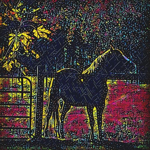 Backgrounds No People Multi Colored Outdoors Close-up Light And Shadow Prisma Art Edited Tennesee Walking Horse Equestrian Life Outdoors❤ Texas Playing With Filters