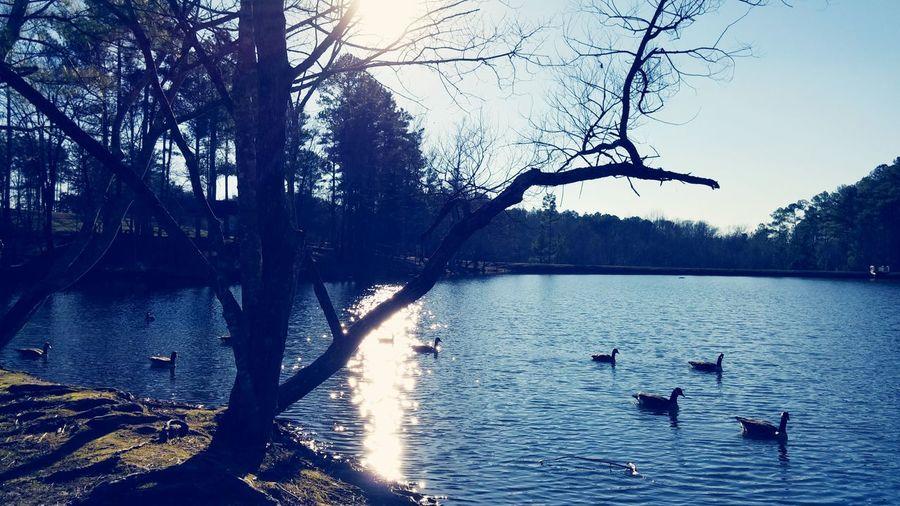 Ducks lake tennessee First Eyeem Photo