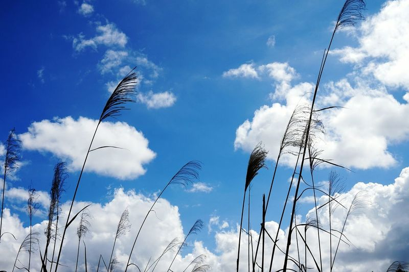 Silhouette of plants against blue sky