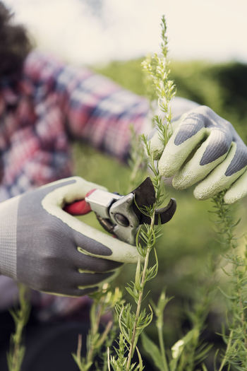 Close-up of woman holding plant on field