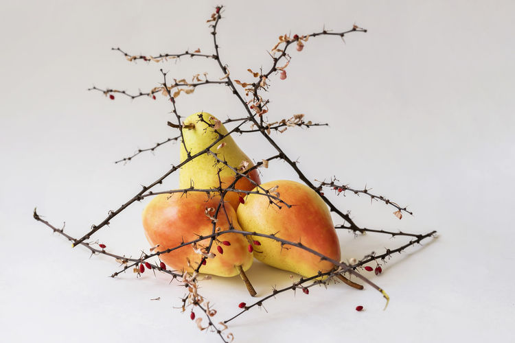Bright ripe pears in dry thorny branches with berries, colorful still life like ikebana on a light background Fruit Healthy Eating Food And Drink Branch Food Freshness Close-up Nature Pear Apple - Fruit Ripe No People Tree Wellbeing Plant Orange Orange Color Twig Prickly IKEBANA Art Design Still Life Vitamin Bright
