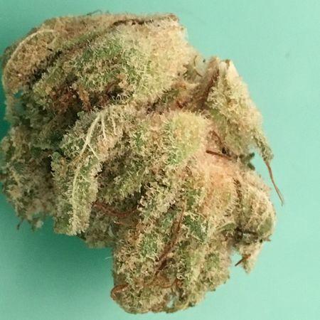 Gorilla glue n4 Weed Weed Life 420 Strain Thc WeedPorn
