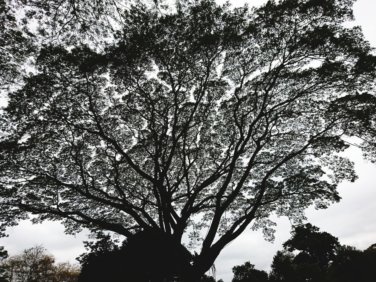 LOW ANGLE VIEW OF SILHOUETTE TREE