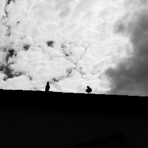 Low angle view of silhouette birds perching on roof against sky
