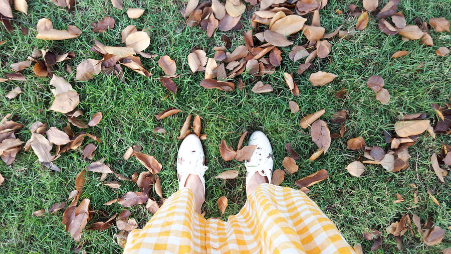 FootFeet Grass Standing Nature High Angle View Outdoors Day Vintage Park Green Lonely Garden Autumn Leaves Beautiful Nature Travel Beginning Shoes Dress Refreshing Lazy Slow Day Off Unwind