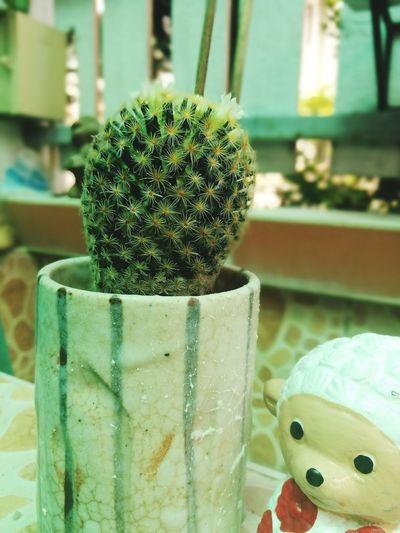 Cactus Focus On