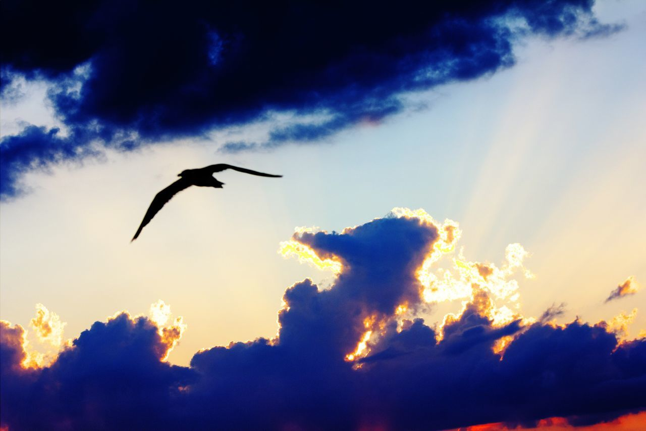 flying, bird, animal themes, animals in the wild, one animal, sunset, sky, low angle view, spread wings, mid-air, silhouette, nature, animal wildlife, beauty in nature, cloud - sky, outdoors, scenics, no people, tranquil scene, motion, tranquility, day