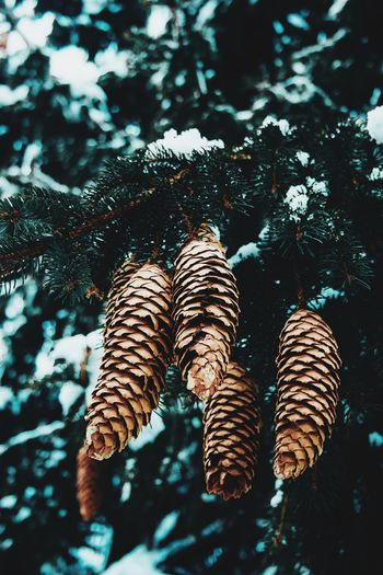 Cones Nature One Person Nature Low Section Day Human Body Part Body Part Human Leg Tree