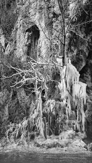Winter is coming 2017 Wintertime ⛄ Ice Icetree No People Outdoors Day Travel 2017 Wintertime Winter Blackandwhite Black & White Tree Cold Winter ❄⛄ Cold Temperature Colderweather Winter 2017 Varese Blackandwhitephoto Ice Winter Is Coming Coldwater Beauty In Nature