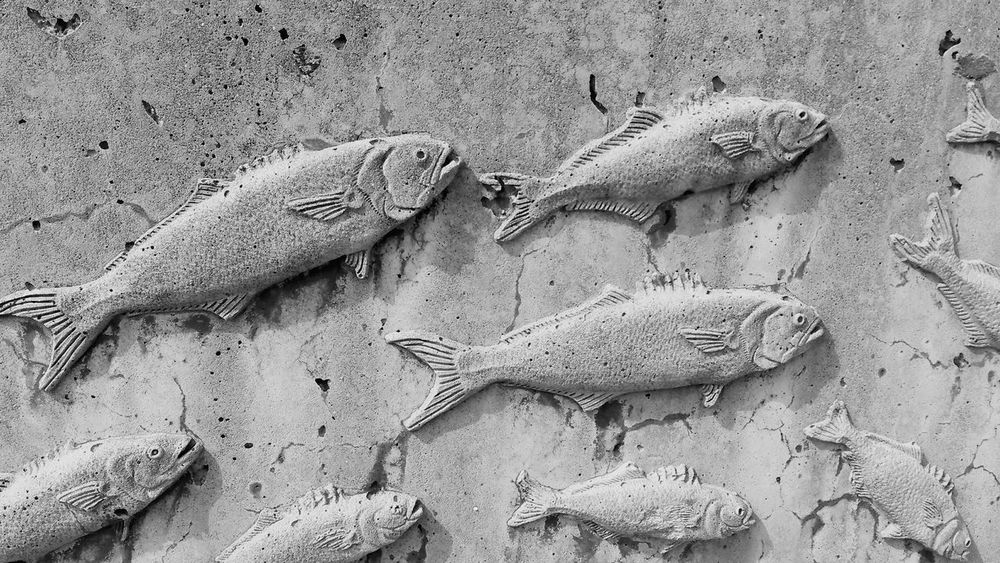 Full Frame No People Outdoors Close-up Animal Themes fish time Concreat black & white