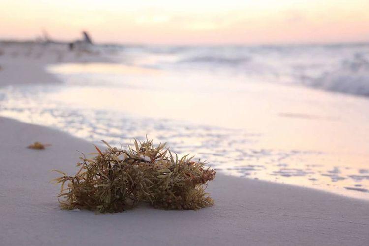 Early sunset on the Cuban coast. Sunset Cuba Beach Beach Photography First Eyeem Photo