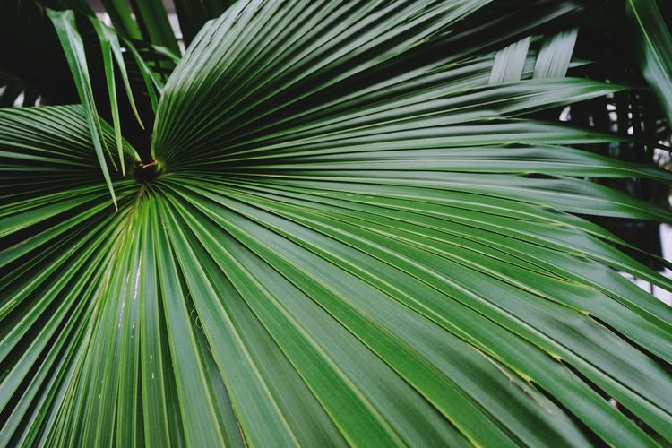 Close-up of palm tree leaf