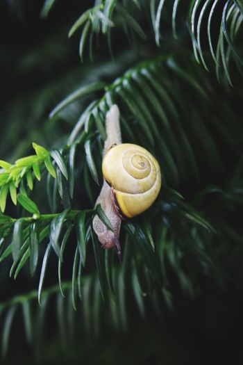 Close-up of snail on a plant