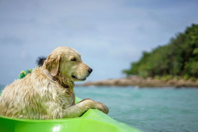 Sea Boat Tour One Animal Animal Animal Themes Water Vertebrate Focus On Foreground Mammal Dog Nature Looking Away Looking Day Animal Head  Animals In The Wild No People Canine Domestic Domestic Animals Pets Close-up